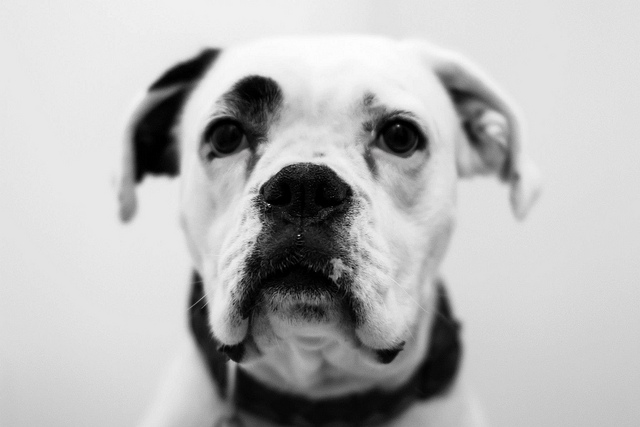 dog-black-and-white